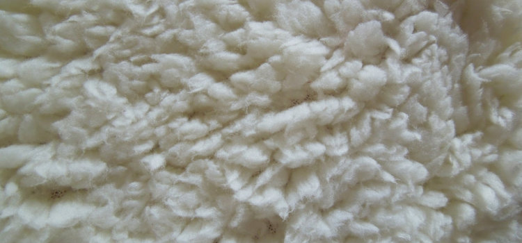 Wool carpet care – how to maintain a wool carpet